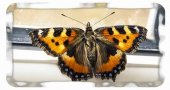 Приметы о бабочках, которые залетают в наши дома и квартиры