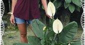 Спатифиллум - «Женское счастье» цветочной красоты