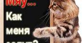 Имена - Клички для кошек