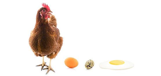 Калорийность яйца.