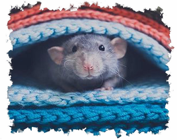 этого вида мышь затаилась картинка развитие дается тяжело