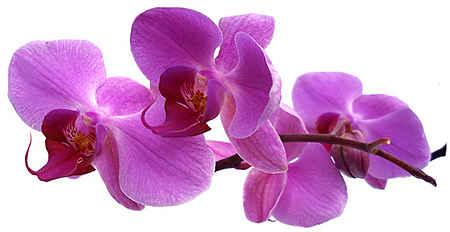 Лилии с какими цветами сочетаются