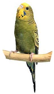 Разговорчивый попугайчик