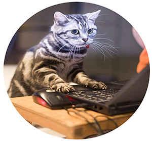 Кошка зависла онлайн