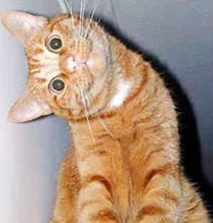 Странно смотрит кошка