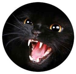 Кошка кусается