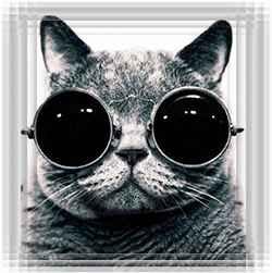 Кошачий психолог