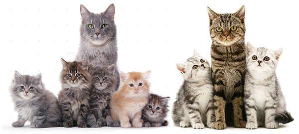 Если снится кошек с много котятами