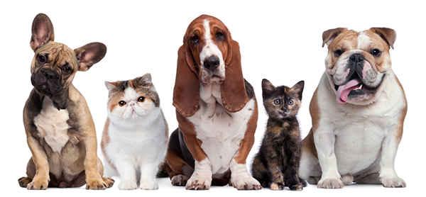 Собаки + кошки