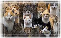 Дом полон кошек