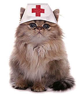 Медицинская кошка