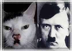 """Кличка у кошки """"Гитлерша"""""""
