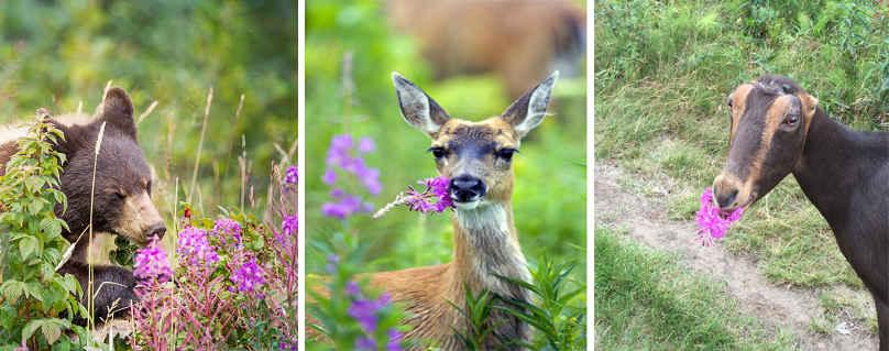 Полезное растение для животных