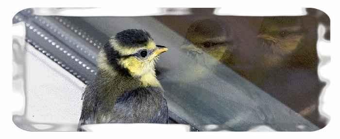 Птица в окне дома