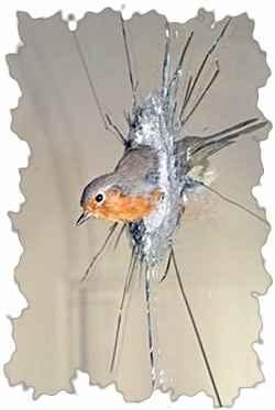 Птица влетевшая в стекло окна