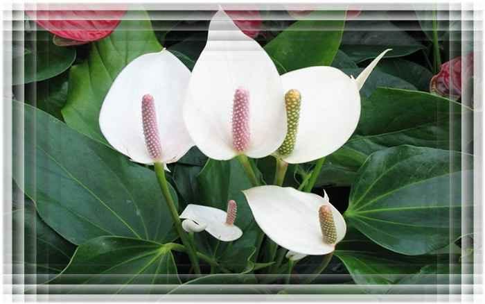 Обильноцветущий вид цветов