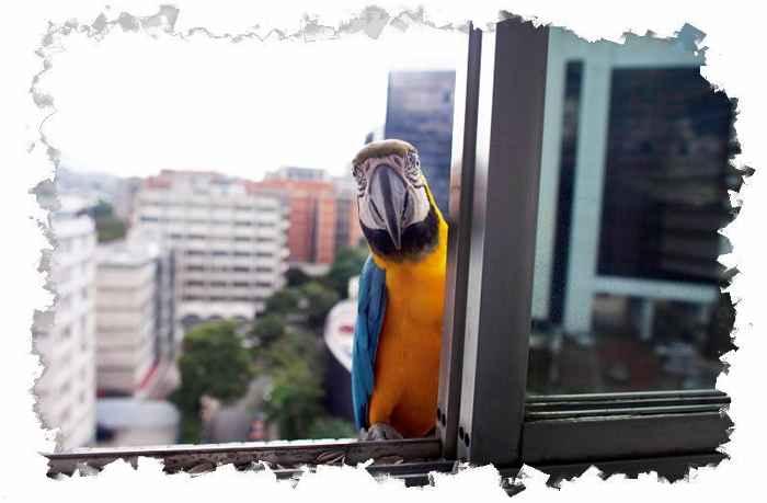 Попугай на пороге окна