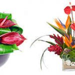 Уход за цветами Антуриум в домашних условиях